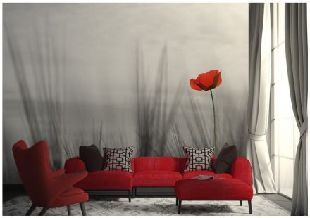 Wall mural wallpaper Lonely Red Poppy flower